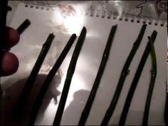 Первый обзор черенков орхидей после обработки их пастой цитокениновой - YouTube