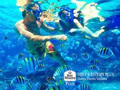 EL MEJOR HOTEL DE PUERTO VALLARTA. En Best Western Plus Suites Puerto Vallarta, le invitamos a disfrutar de un viaje lleno de grandes aventuras. Una de ellas, será descubrir la belleza que guardan las aguas de la costa del Pacífico con la práctica de snorkeling.  #VisitPuertoVallarta