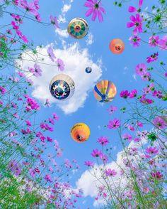 Cosmos, Ferris Wheel, Congratulations, Fair Grounds, Japan, Flowers, Nature, Travel, Outdoor