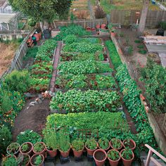 Productive garden on a small urban lot |  vegetablegardener.com