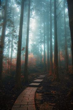Photograph The Path In My Dream by Hanson Mao on 500px