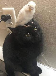 Mira a estos dos mejores amigos ❤ - Schwarze Katzen - Perros Graciosos Cute Little Animals, Cute Funny Animals, Cute Cats, Funny Cats, Baby Cats, Cats And Kittens, Cat Aesthetic, Cute Creatures, Pretty Cats