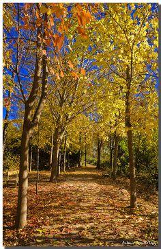 Beautiful autumn tree pathway