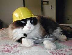 Hard hat kitteh