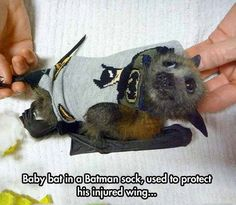 <p>This good samaritan rescued the cutest baby bat ever after it had injured its wing. </p>