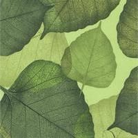 Flora Large Green Leaves $10.29