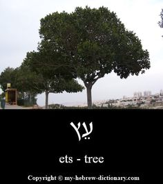 """How to say """"Tree"""" in Hebrew. Click here to hear it pronounced by an Israeli: http://www.my-hebrew-dictionary.com/tree.php"""