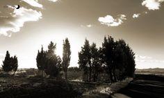 árboles ciprés