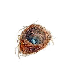 Watercolor Nest Painting