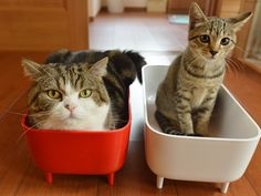 Maru and little sister.  Maru is in the IN box - and little sister is in the OUT box...is what the bubble over Maru's head would say.