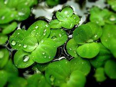 Rustic Nature Beauty -Part 2 (15 images) - ImageBlogs.org | Wonderful Image Island |ImageBlogs.org | Wonderful Image Island
