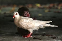 Obsessed with this bird | 25 Monkeys That Are Obsessed With Dogs
