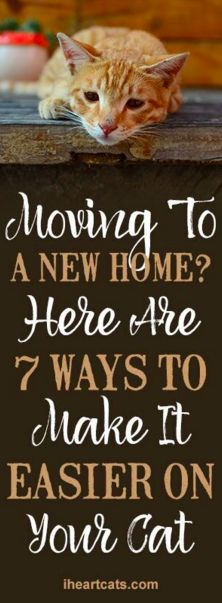 Moving To A New Home? Here Are 7 Ways To Make It Easier On Your Cat