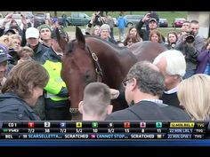 American Pharoah after the Breeders Cup Classic demonstrates what a truly kind and calm horse he is. And Bob gives a shout out to Zenyatta in his interview.  YouTube