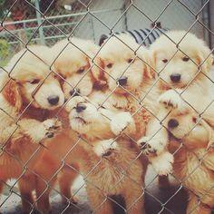 Cute Puppies <3