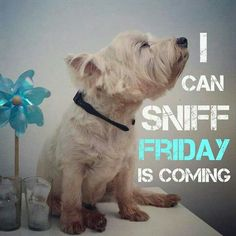 I Can Sniff Friday Is Coming. Re-pinned by Murray Taylor Chartered Certified Accountants, murray-taylor.com