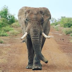 Elephant seen on safari at Madikwe National Park
