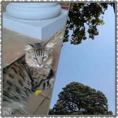 #365daysofmemories #2016: Day 51 - below, #thecat @ rest above, #bluesky #crazycatlady #southafrica  #peaceful