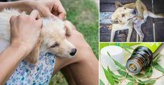 Si amas a tus mascotas y quieres cuidarlas respetando la naturaleza y sin productos químicos, estos consejos te servirán.
