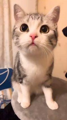 Wandschild plaque métallique Si tu ne plus continuer à sais sort DECO chat