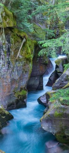 MONTANA:  Avalanche Gorge is a must see destination for anyone in the West Glacier area. With its luscious green canopy of moss and brilliant red rocks, there is no wonder why this little gorge is a favorite destination of photographers and travelers alike.