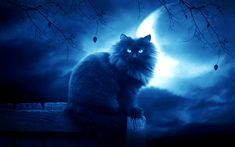 the dark moon lego evil cat new 1254981 The Dark Moon Lego Evil Cat New Wallpaper