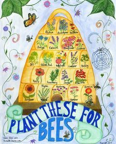 I love this adorable drawing I found from The Garden Diaries, that showcases a bunch of beneficial pollination flowers to plant to help attract your bees and keep them happy! ❤️❤️ Just so happens, I have all of these seeds and I'll have all of them planted directly around our new flow hive this year! Know of any other plants that are not listed that are good for bees? Drop the names below!!! #PlantsForBees