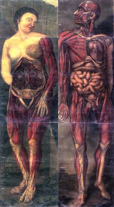 All Things Awesome Medical Drawings, Microscopic Photography, Human Body Anatomy, Magazine Collage, A Level Art, Flesh And Blood, Human Art, Pulp Art, Horror Art