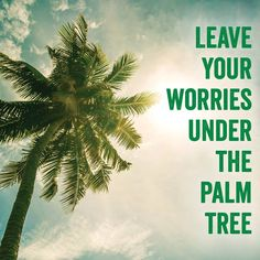 Leave your worries under the palm tree