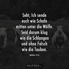 Seht, Ich sende euch wie Schafe mitten unter die Wölfe. Seid darum klug wie die Schlangen und ohne Falsch wie die Tauben. Matthäus 10,16 Wolf, Movies, Movie Posters, God Loves You, Christian Quotes, Pigeon, Sheep, Films, Film Poster