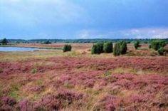 Dwingelderveld, Spier, The Netherlands