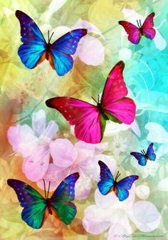 butterflies- AlyZen Moonshadow