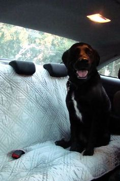 Backseat Cover/Dog Blanket: Who wants to go for a ride? (litter of pics + NEW 1) - HOME SWEET HOME