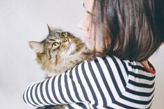 As different as they are, cats and dogs might have a lot in common when it comes to human connection. New research says that dogs aren't the only ones who Spring Aesthetic, Free High Resolution Photos, What Cat, Curious Cat, Human Connection, Old Cats, All About Cats, Cat Toys, Cute Cats
