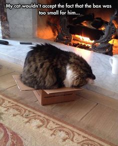 Hilarious images of the week -82 pics- My Cat Wouldn't Accept The Fact That Box Was Too Small For Him