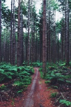 New Zealand Forest | by: { SJROSS }