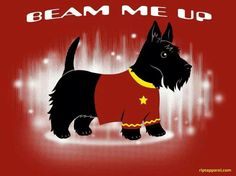 Beam me up Scottie - Star Trek Scottie. This so appeals to the nerd in me