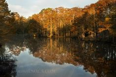 Bayou Lacombe Reflections by  John Snell