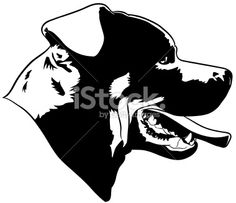 Rottweiler dog Royalty Free Stock Vector Art Illustration