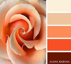 Alina Babina | Алина Бабина | FLOWERS Orange Color Palettes, Colour Pallette, Color Palate, Wall Paint Inspiration, Color Inspiration, Beautiful Color Combinations, Color Combos, Color Verde Jade, Paint Color Schemes
