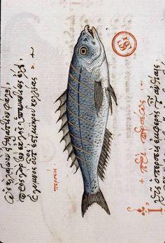poisson 2-14-17