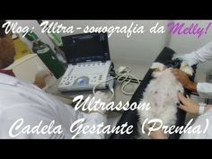 Vlog | Ultra-sonografia da Melly | Ultrassom cadela gestante (prenha)!