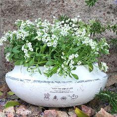 """""""Simple Life"""" garden planter ~ eggshell white"""