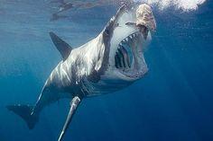 Was sind die 15 gefährlichsten Tiere der Welt?