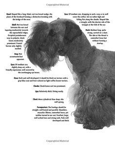 Cesky Terrier (Comprehensive Owner's Guide): Katherine A. Eckstrom: 9781593783570: Amazon.com: Books