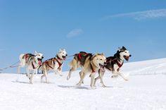 Tromsoe Aurora Break - Huskies and Snowmobiles