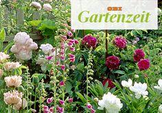 Im Mai blühen die opulenten Blüten der Pfingstrosen und ihrer Beetpartner im Garten. So werden die Schönheiten gepflanzt und gepflegt.