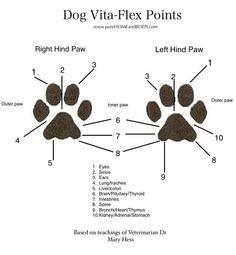 Voet reflex punten bij honden.