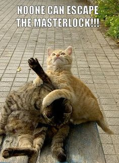 Extreme cat wrestling!