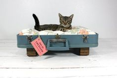 Upcycled vintage suitcase turned cat bed. Loki would LOVE this. He always falls asleep in or on my suitcase when I'm packing. via shannoneileenblog.typepad.com, image and concept by Miles & Aimee at http://www.etsy.com/people/AtomicAttic